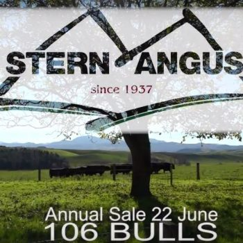 Stern Angus - 2017 Bull Sale Lot Thumb