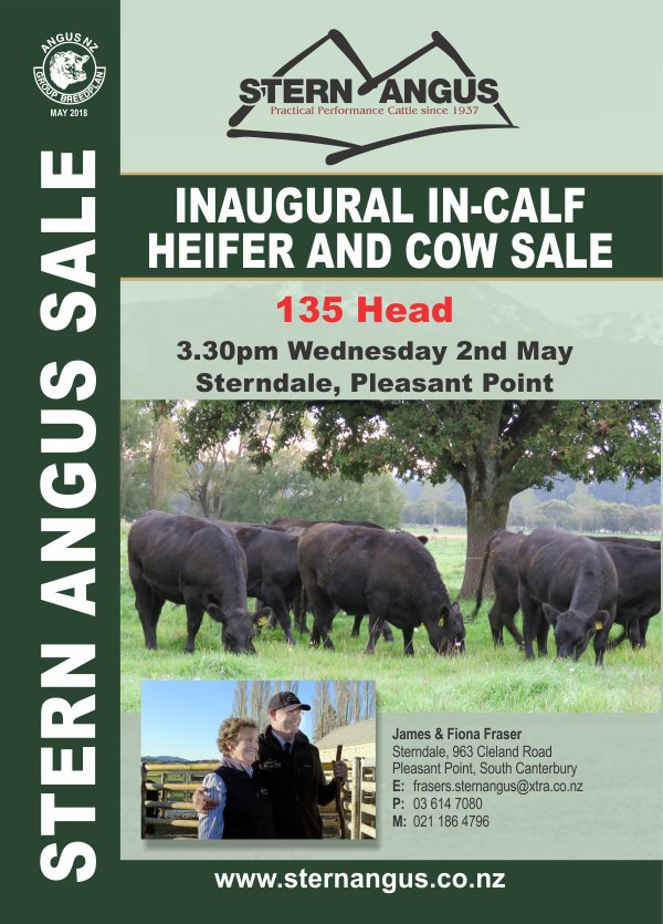 Stern Angus Inaugural In-Calf Heifer and Cow Sale 2018